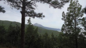 tenerife mountains - forests