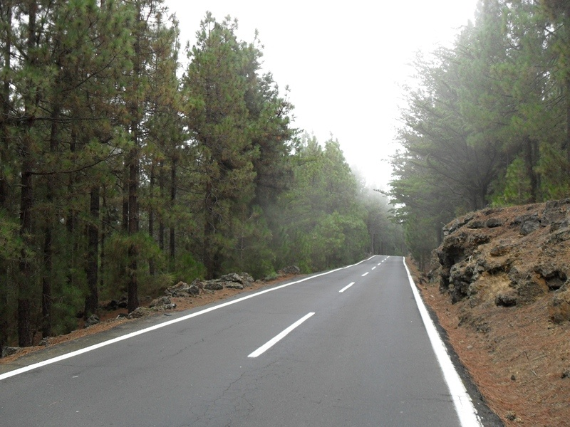 Beautiful forests on the north side of Tenerife, Orotava valley.
