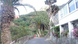 chamorga faro de anaga-back in the village again