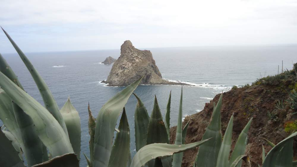 Roques de Anaga - view through agave