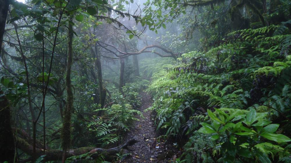 Anaga Mountains Tenerife - in the rain forest
