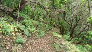In the forest below the Cruz de Chamorga.