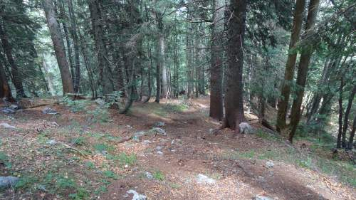 This is a part through the forest, very steep but pleasant.